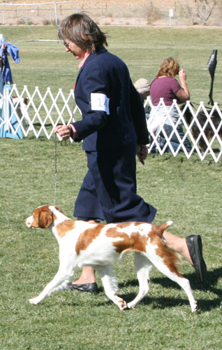 how to ring steward at a dog show